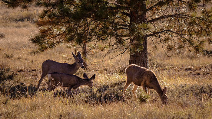 Faune locale, Bryce Canyon