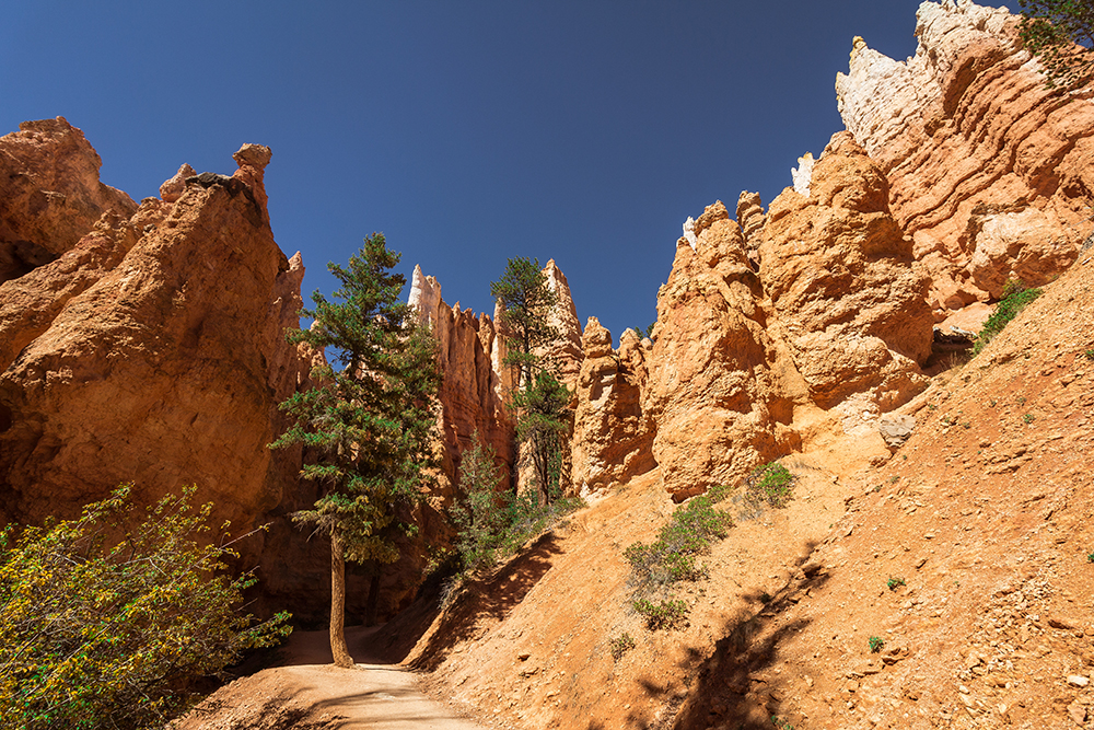 Wall Street, Navajo Loop, Bryce Canyon
