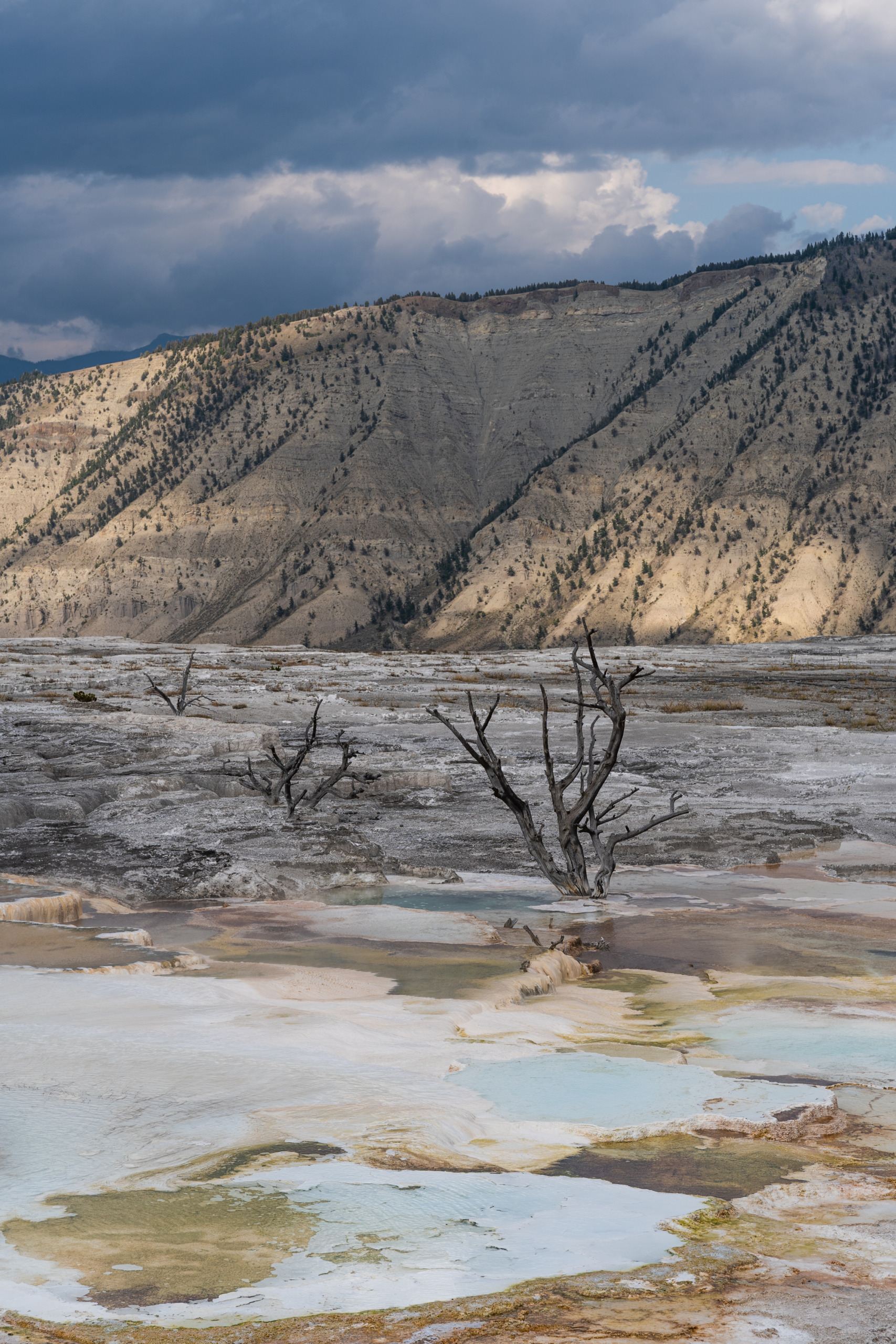 Mammoth Hot Springs Area, Yellowstone National Park, Wyoming, USA